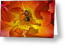 Rose With Bee Greeting Card