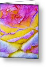 Rose With Dew Drops In Candy Colors Greeting Card