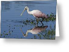 Roseate Spoonbill Hunting Greeting Card