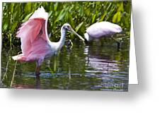 Roseate Spoonbill No.2 Greeting Card