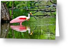 Roseate Spoonbill Wading Greeting Card