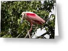 Roseate Spoonbill  What Are You Looking At 2 Greeting Card