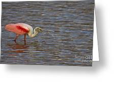 Roseatr Spoonbill   #4756 Greeting Card
