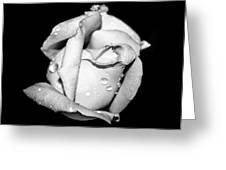 Rosebud In Black And White Greeting Card