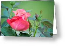 Rosebud Greeting Card