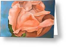Rosebud Peaches And Cream Greeting Card