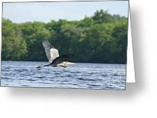 Roseland Lake Great Blue Heron Fly By  Greeting Card