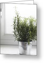 Rosemary In Metal Pot Greeting Card
