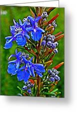 Rosemary In Park Sierra Near Coarsegold-california  Greeting Card