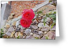 Roses Against The Wall Greeting Card