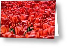 Tulips At The Plaza Hotel Greeting Card