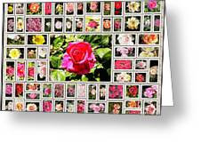 Roses Collage 2 - Painted Greeting Card