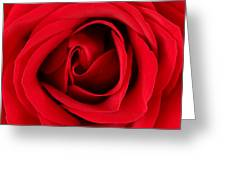 Roses For Life  Greeting Card