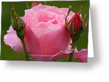 Roses Forever Greeting Card