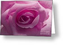 Roses Have Ruffles And Ridges Greeting Card