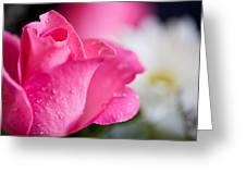 Roses Greeting Card by John Holloway