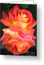 Roses Of Many Colors Greeting Card
