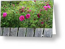 Roses On A Fence Greeting Card