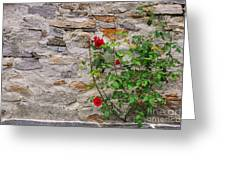 Roses On A Stone Wall Greeting Card