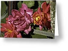 Roses On Trellis Greeting Card