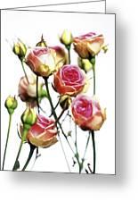 Roses (rosa 'mini Eden') Greeting Card
