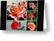Roses Roses Roses I Thank All The Roses Greeting Card