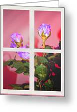 Roses Through The Window Greeting Card