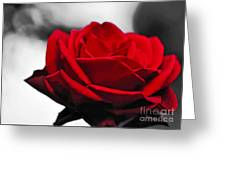 Rosey Red Greeting Card by Kaye Menner