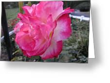 Rosey Rose Greeting Card