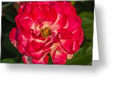Rosey Rose Greeting Card