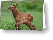 Rosie Elk Youngin Greeting Card