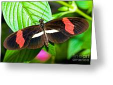 Rosina Butterfly Greeting Card