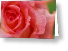 Roslyn's Rose Greeting Card