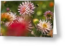 Rosy Dahlias Greeting Card