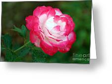 Rosy Reds And Whites Greeting Card