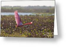 Rosy Soar Greeting Card