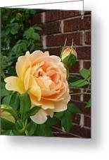 Rosy Sunshine Greeting Card