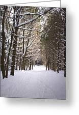 Roth Park Trail 2 Greeting Card