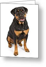 Rottweiler Dog With Drool Greeting Card