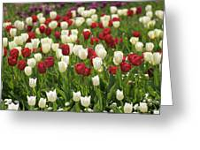 Rouge Et Blanche Greeting Card
