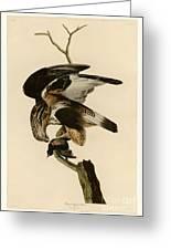 Rough-legged Falcon Greeting Card