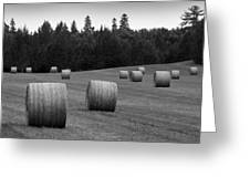 Round Hay Bales Greeting Card