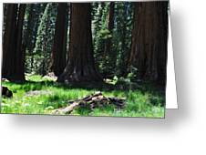 Round Meadow Sequoia Family Greeting Card