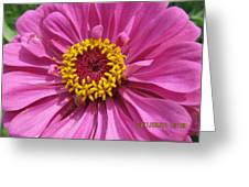 Round Pink Beauty Greeting Card