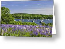 Round Pond Lupine Flowers On The Coast Of Maine Greeting Card