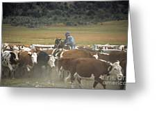 Cattle Round Up Patagonia Greeting Card