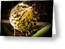 Round Warbler Greeting Card