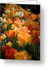 Row Of Colorful Tulips Greeting Card