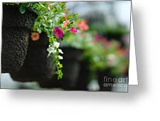 Row Of Hanging Baskets Shallow Dof Greeting Card