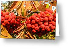 Rowan Berry Greeting Card